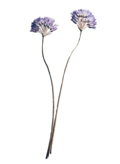 flor-1