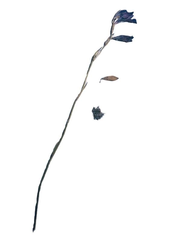 flor-2